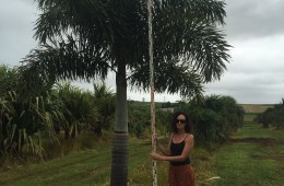 Foxtail Palms – Please Contact For Price.